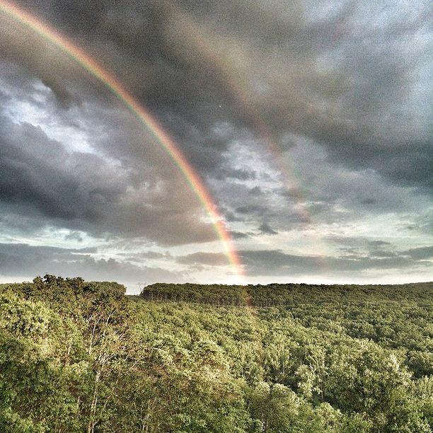 Rainbow-tree-take-2